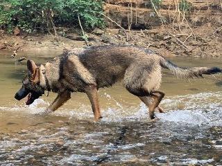 off leash dog